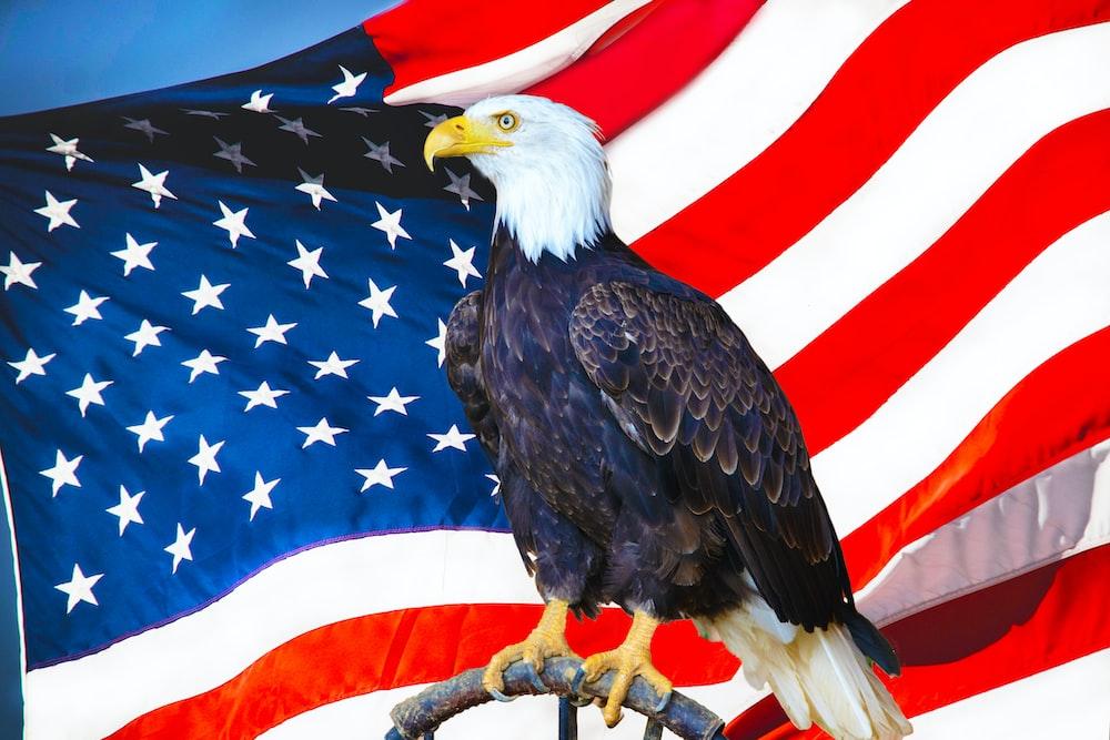 american eagle flying over us flag