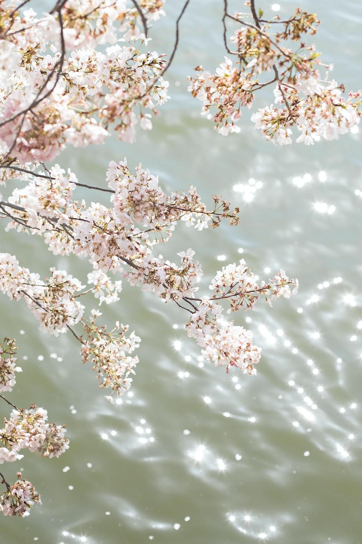 white cherry blossom tree during daytime