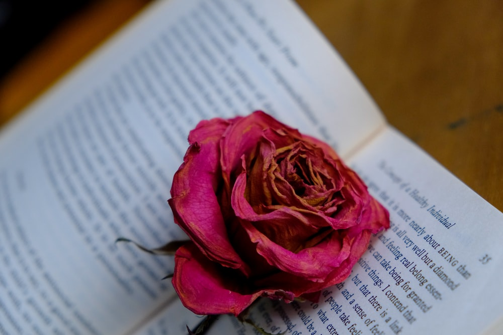 red rose on white book page