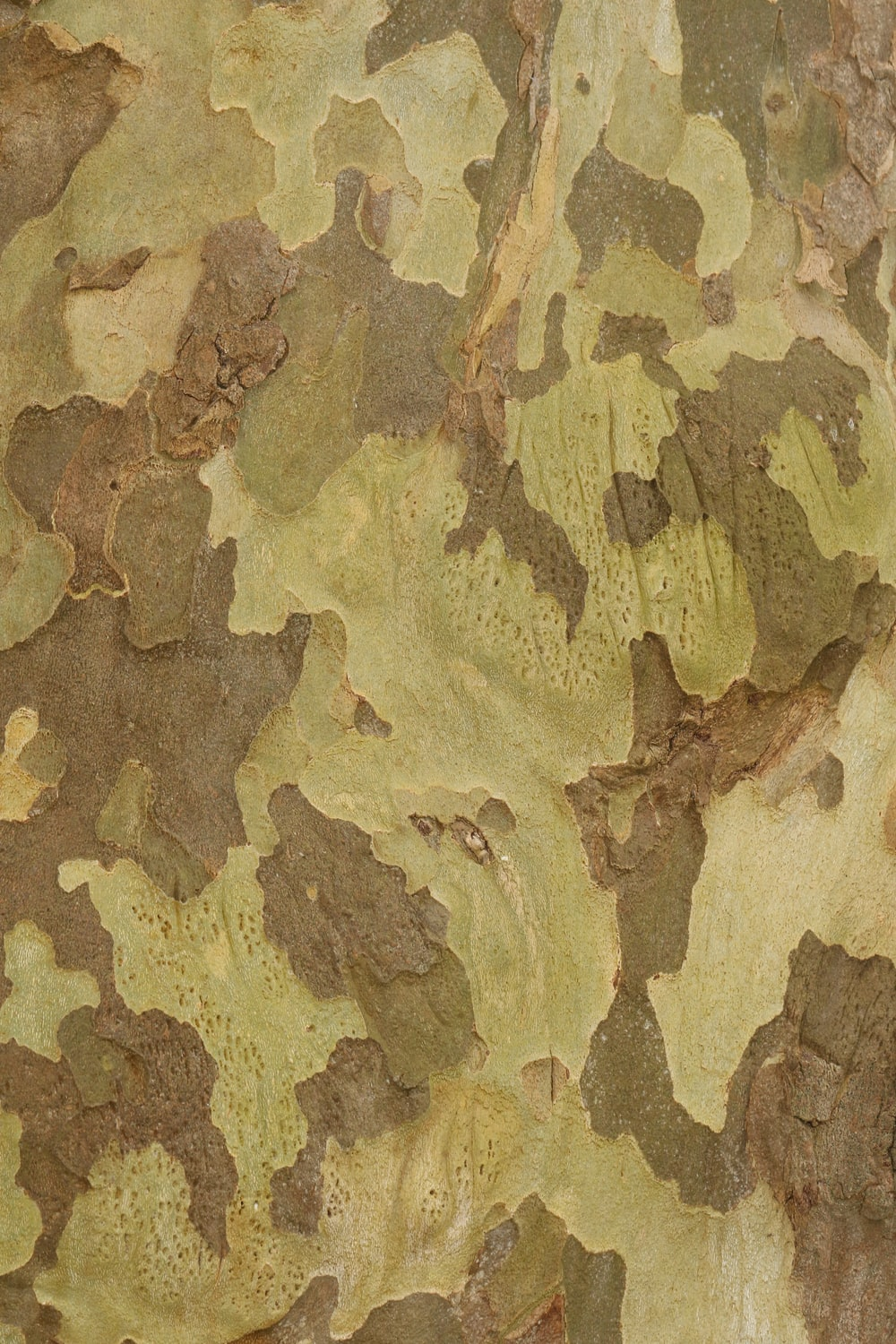 brown and beige camouflage textile