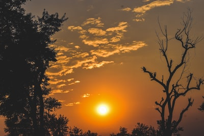 Ranchi silhouette of trees during sunset