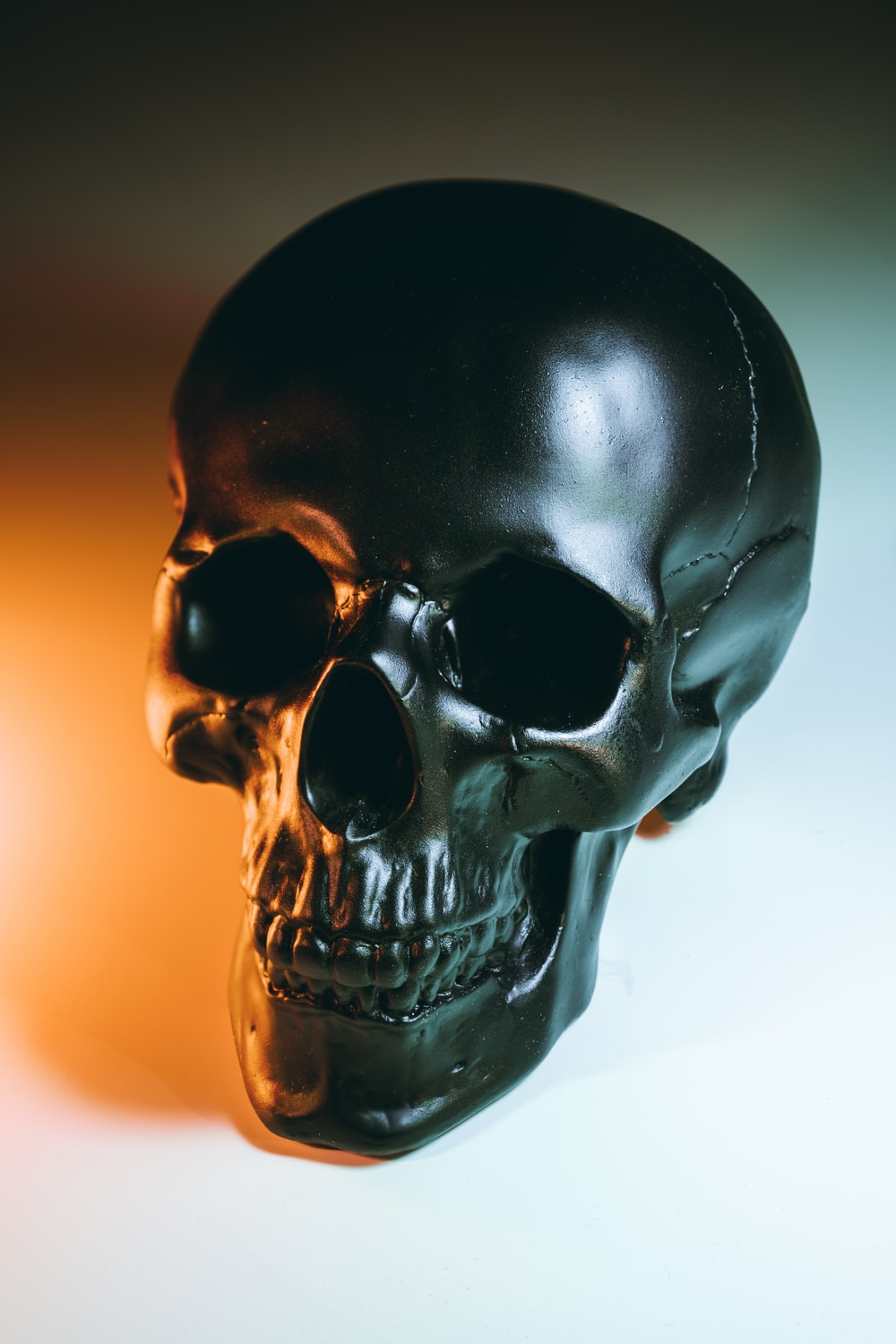 750 Human Skull Pictures Hd Download Free Images On Unsplash
