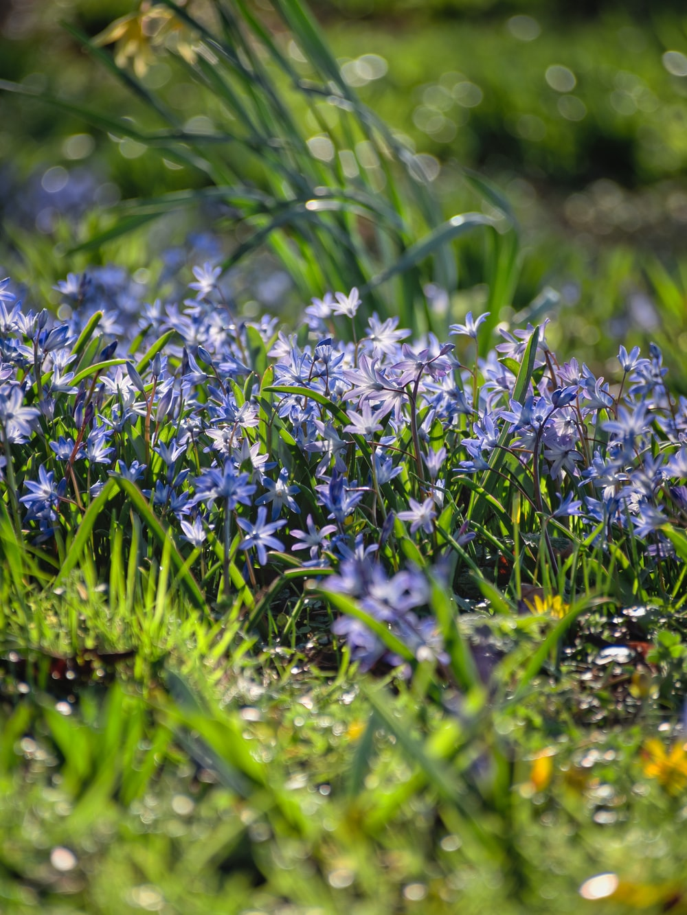 purple flowers on green grass during daytime