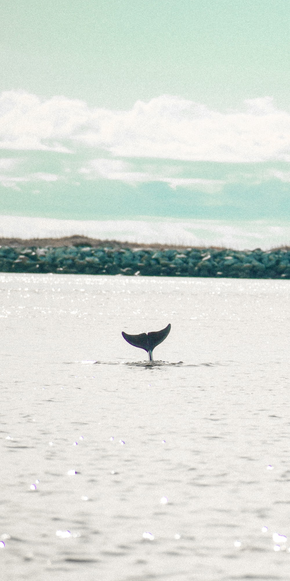 purple whale on body of water during daytime