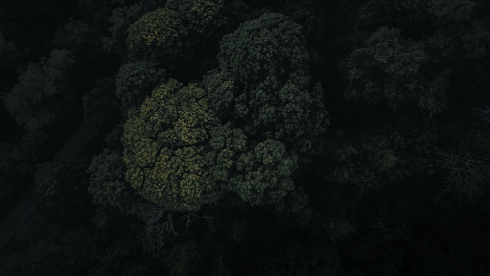 green trees in close up photography