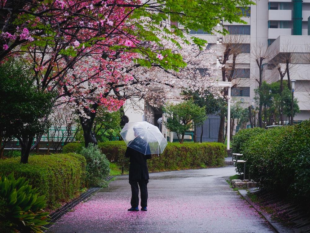 person in white umbrella walking on sidewalk during daytime