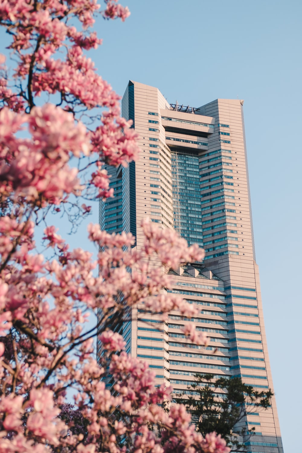 pink cherry blossom tree near brown concrete building during daytime