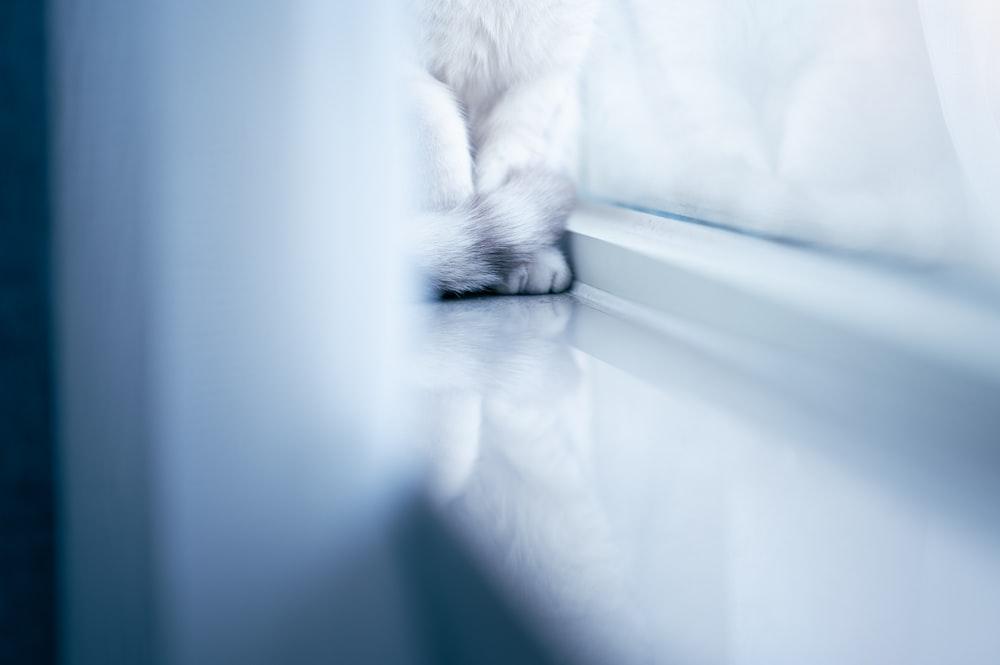white cat on white window