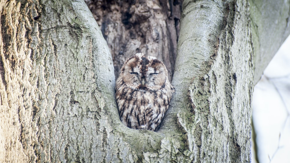 brown and white owl on brown tree trunk