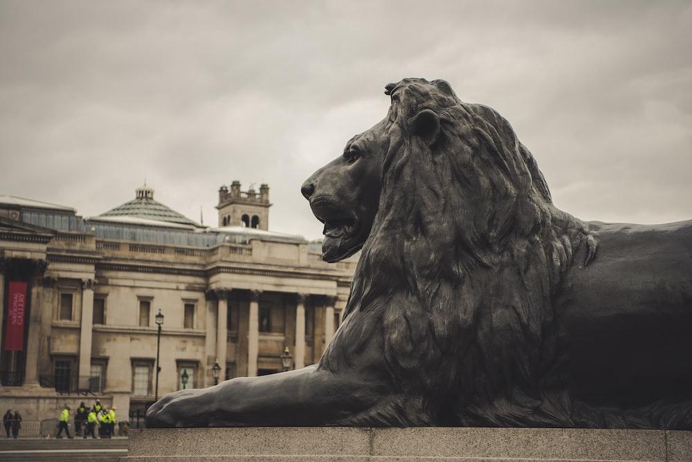 gray lion statue near building