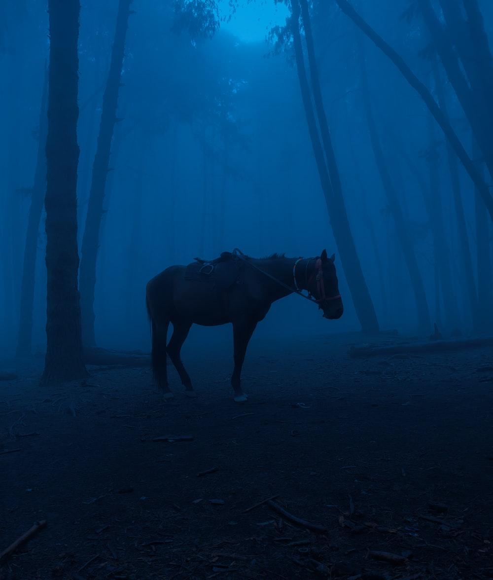 black horse standing under blue sky during daytime
