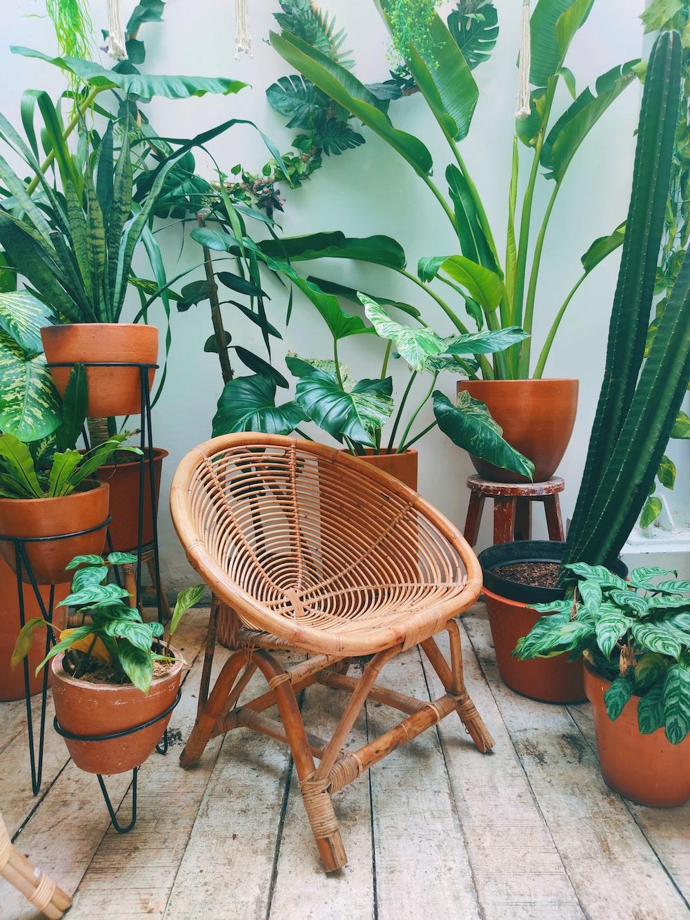 brown woven chair near green plant