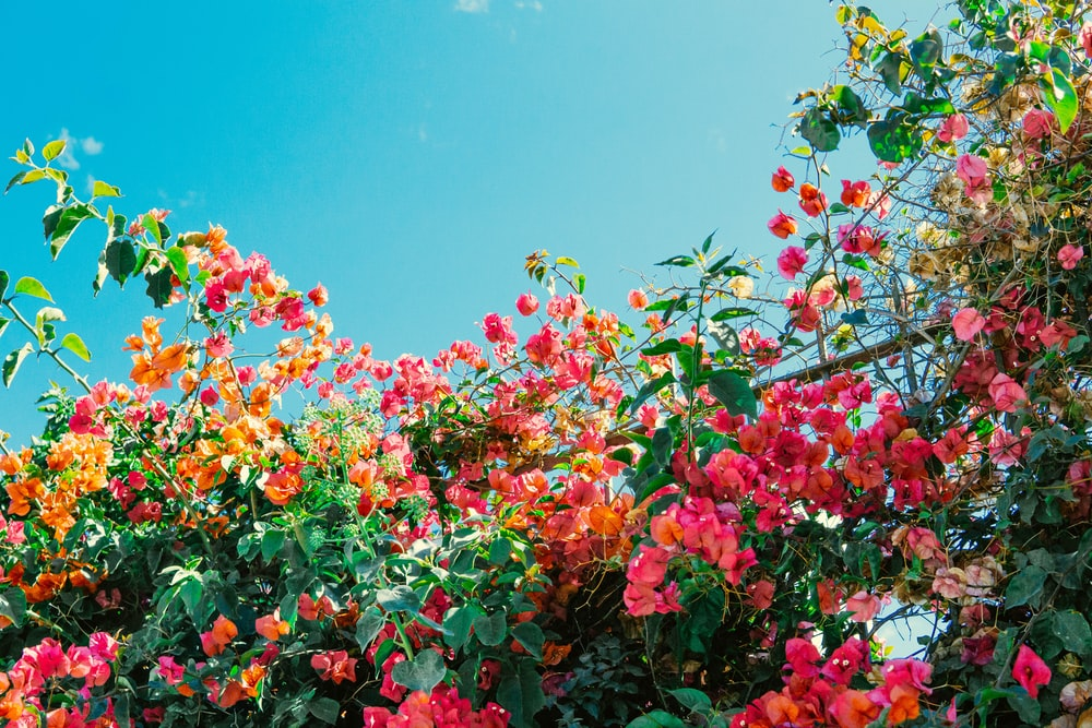 red and yellow flowers under blue sky during daytime
