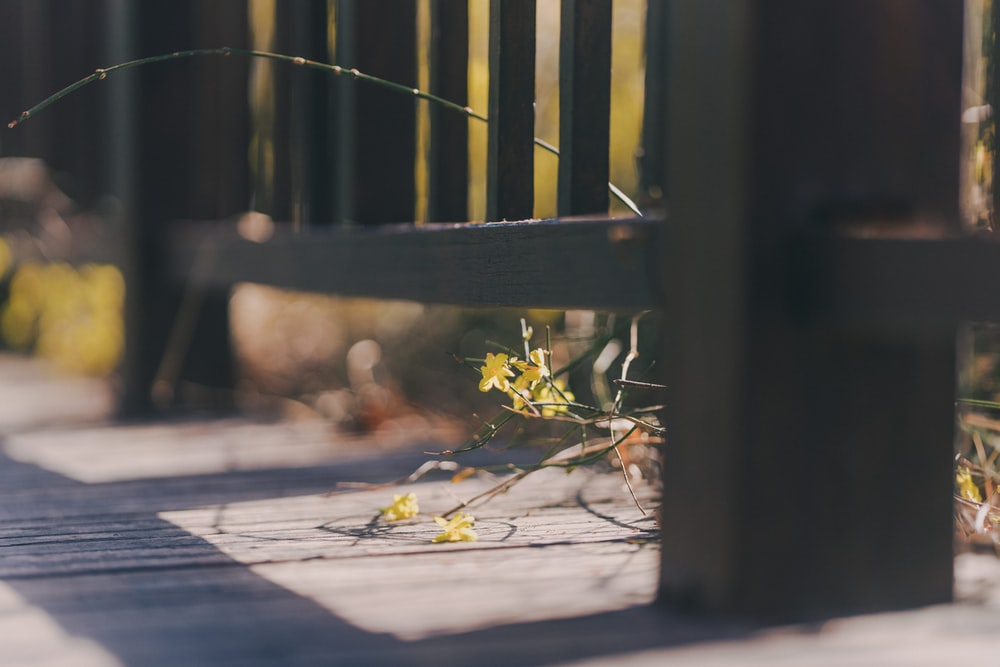 yellow flower on brown wooden fence
