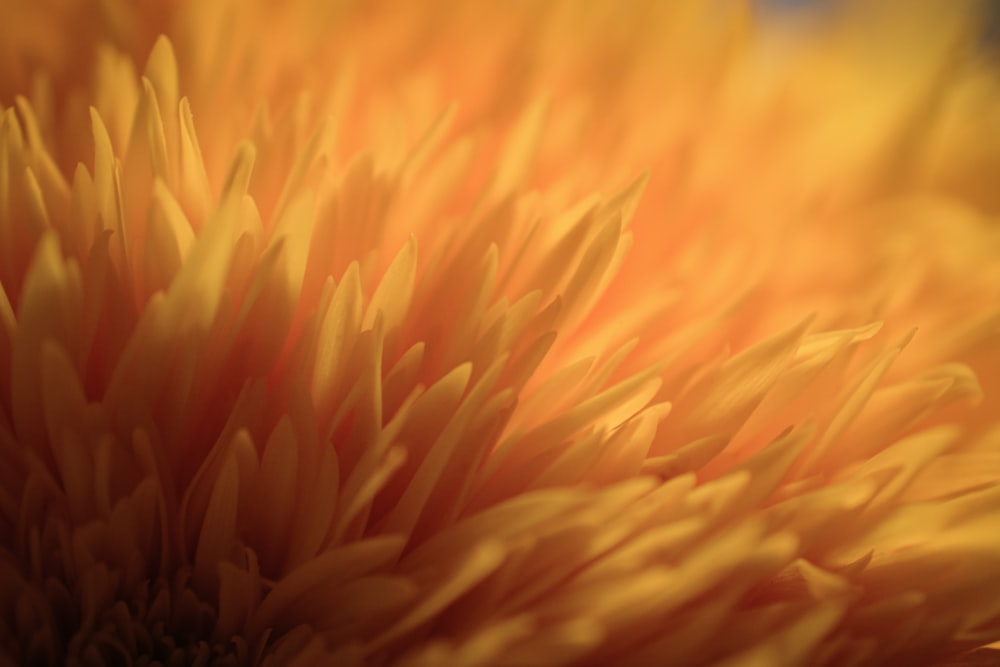 yellow flower in close up photography