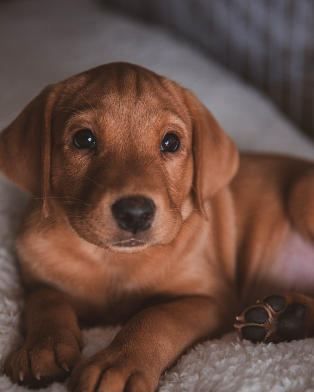 brown short coated puppy on white textile