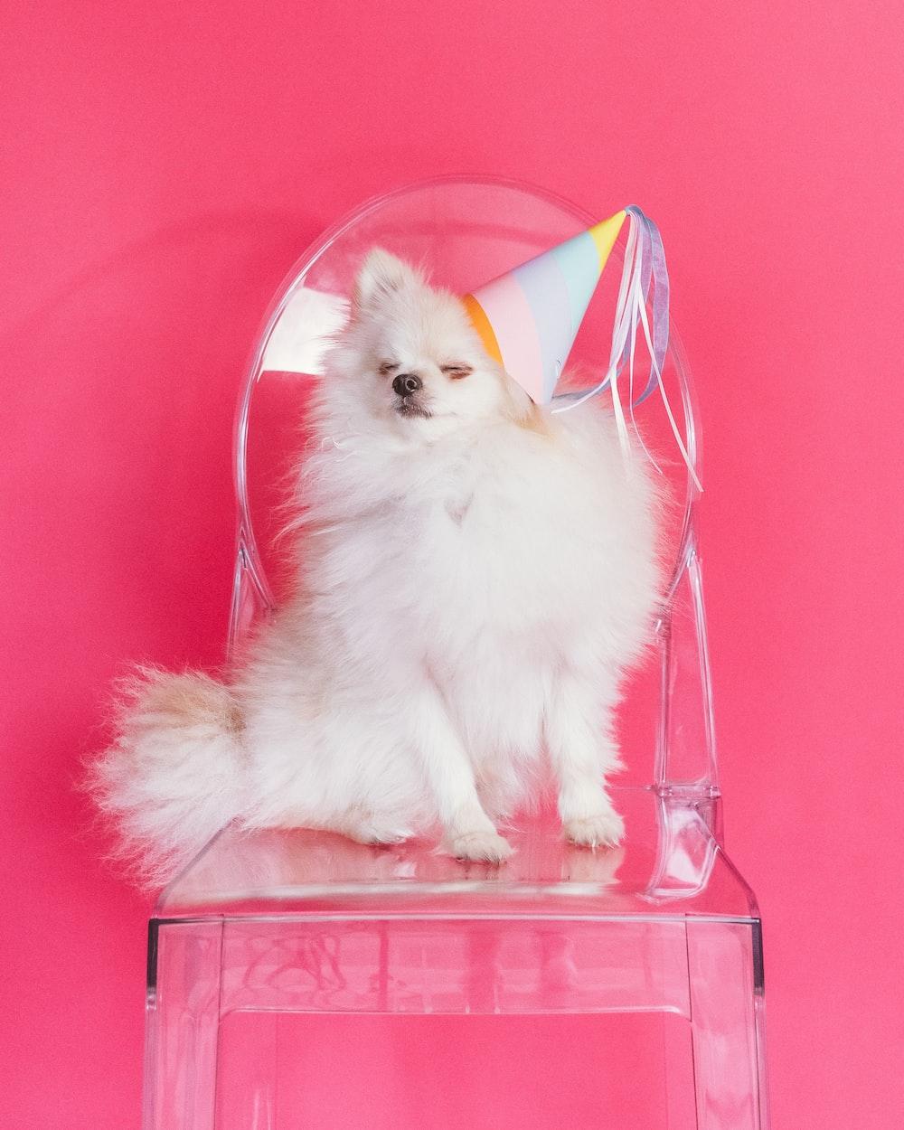 white pomeranian puppy in pink basket