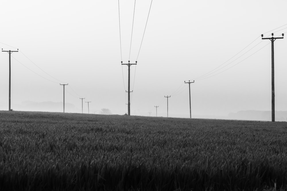 grayscale photo of electric posts