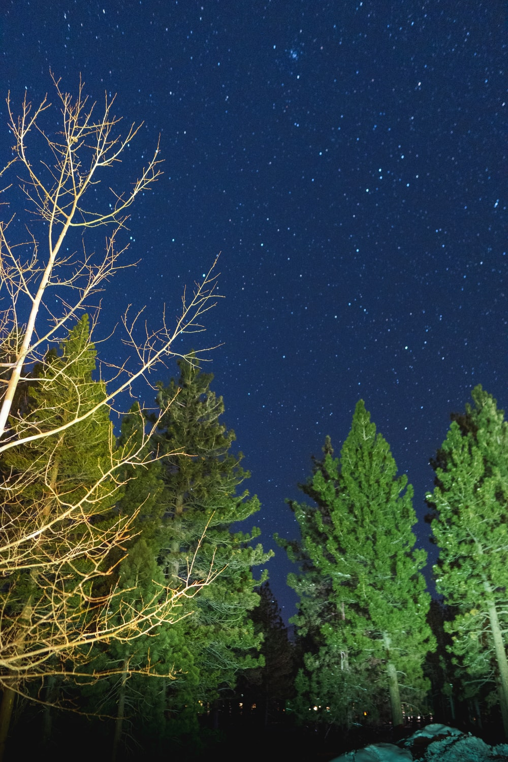 green pine trees under blue sky during night time