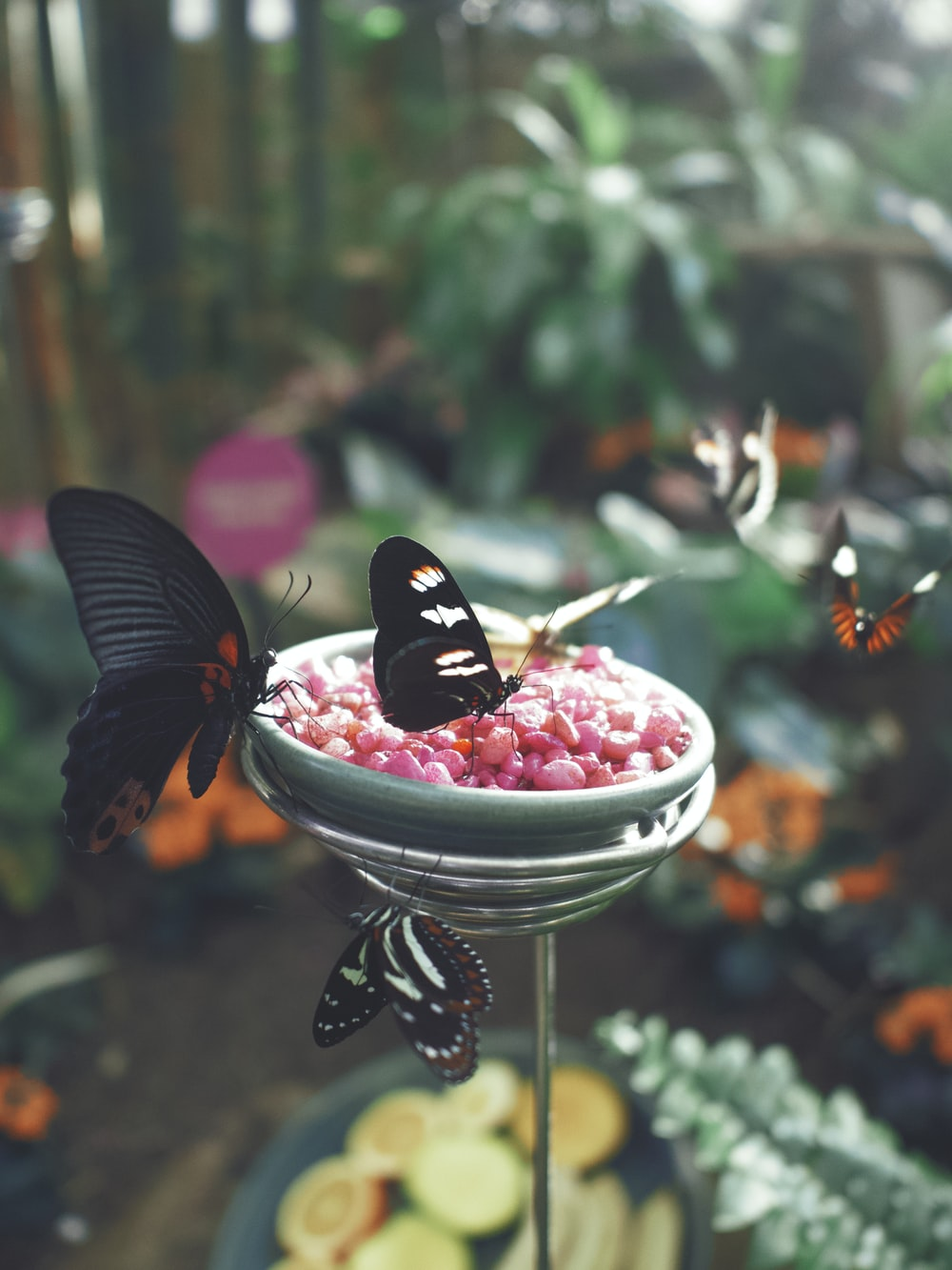 black butterfly on red and white round fruit on white ceramic bowl
