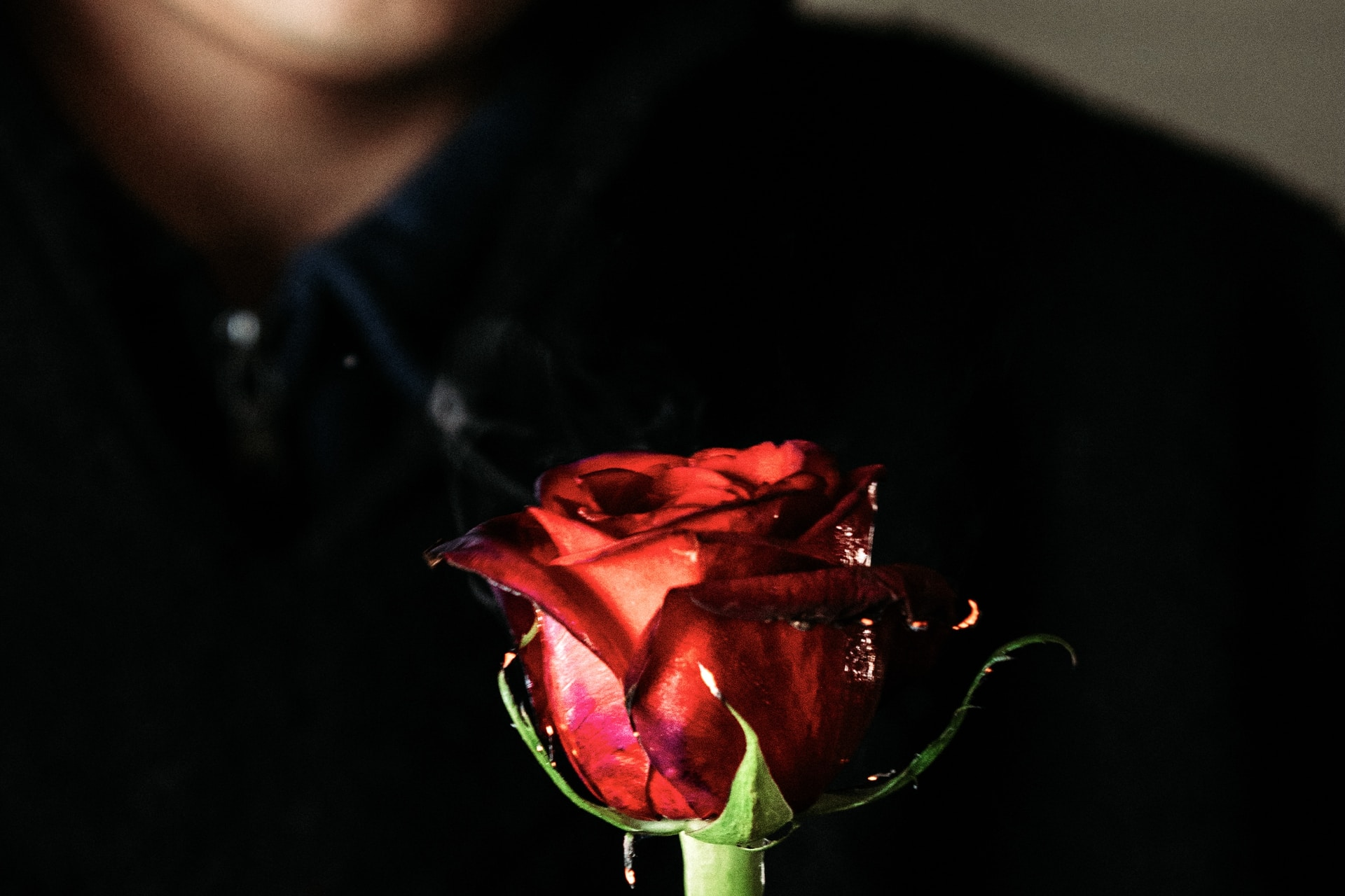 woman in black hoodie holding red rose