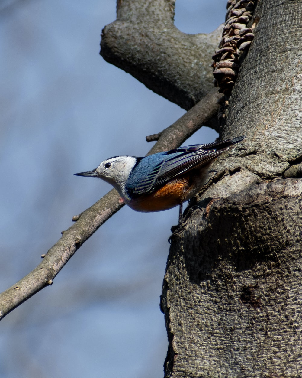 blue and brown bird on tree branch during daytime