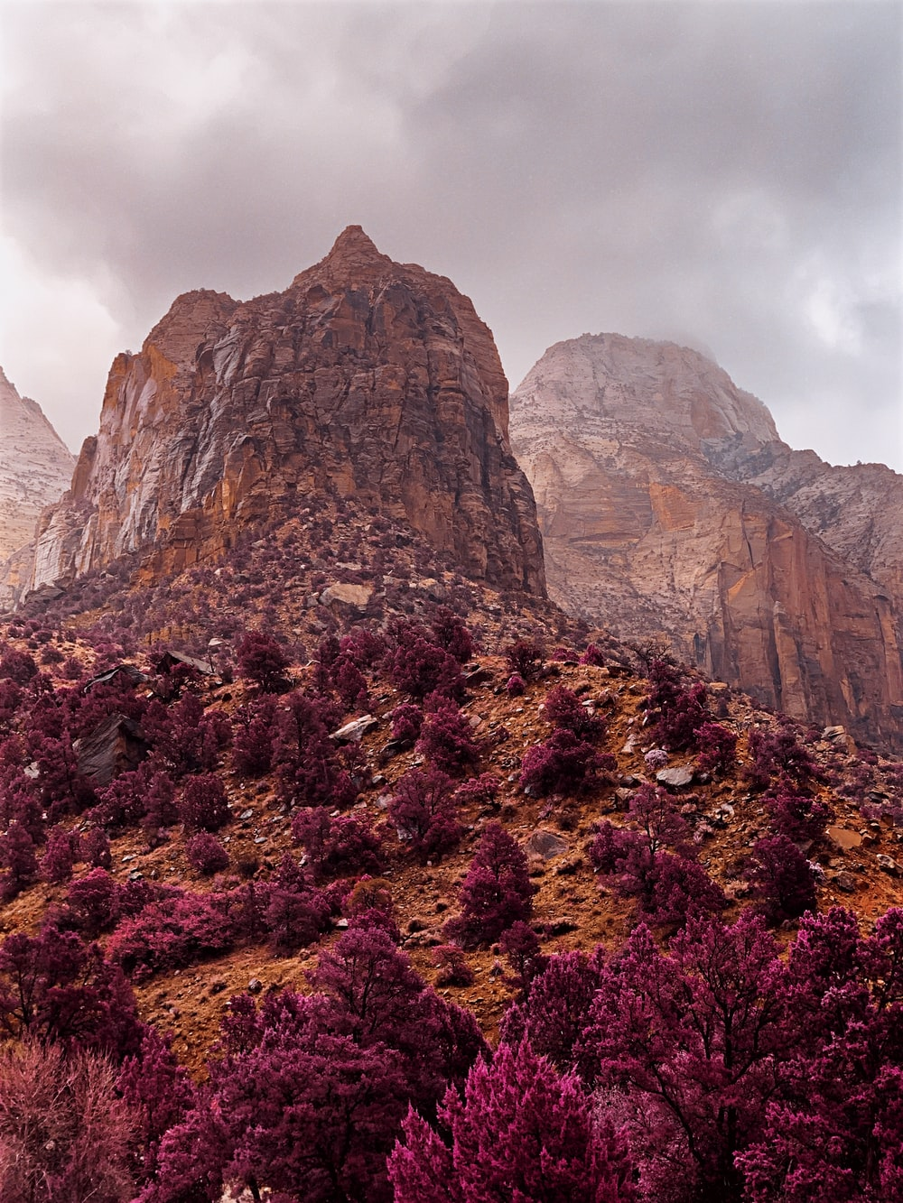 purple and brown flower field near brown rocky mountain under white cloudy sky during daytime