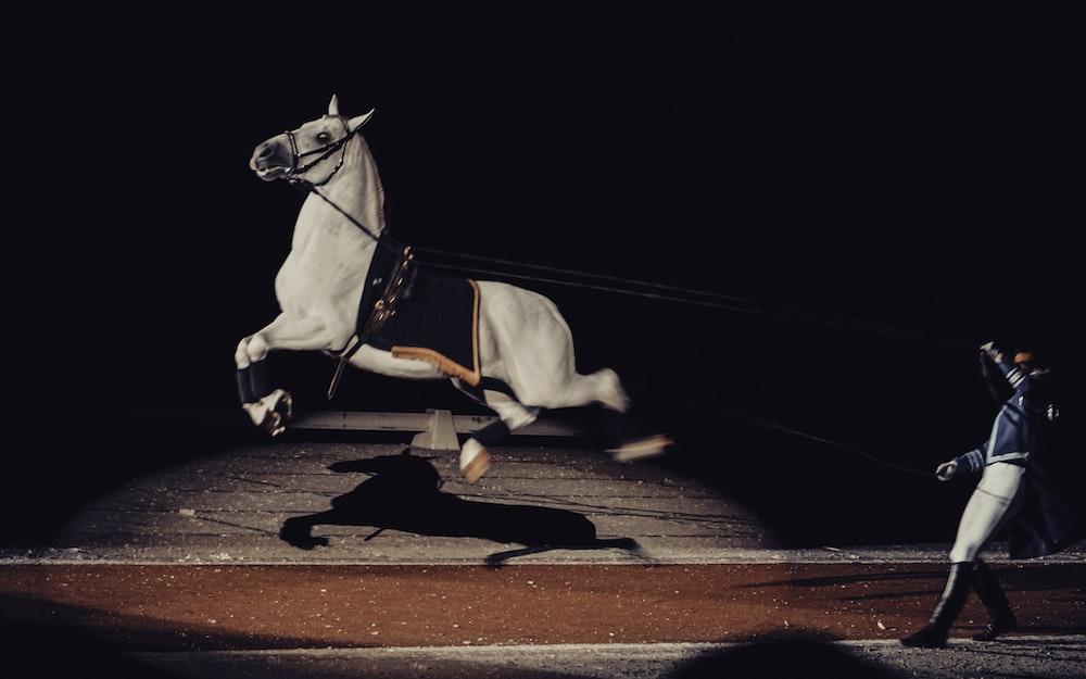 white horse on brown wooden floor