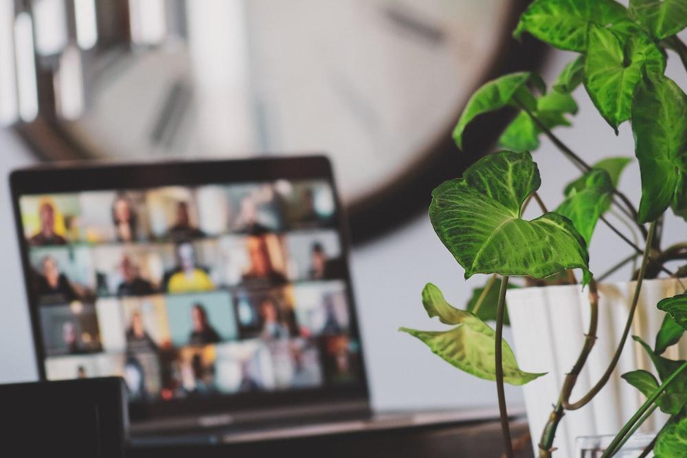 black flat screen tv turned on near green plant
