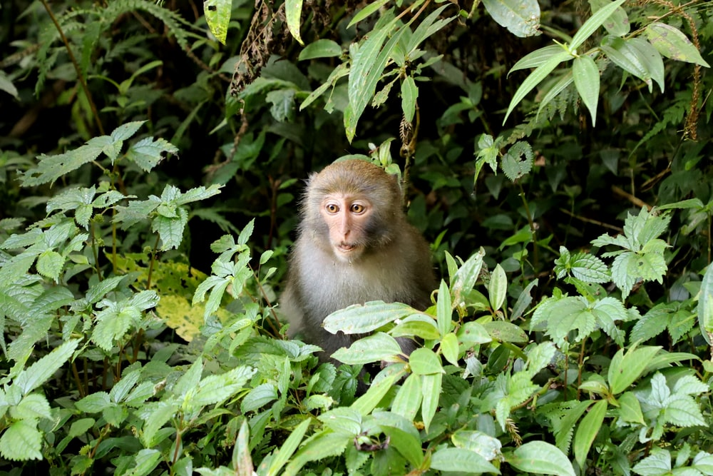 brown monkey on green plant