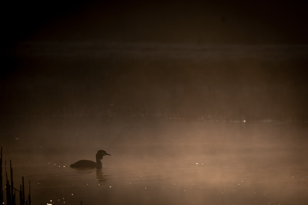 silhouette of swan on water during night time