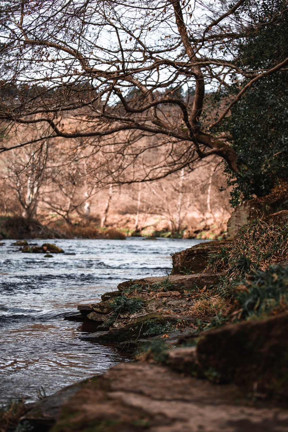 brown tree trunk on river