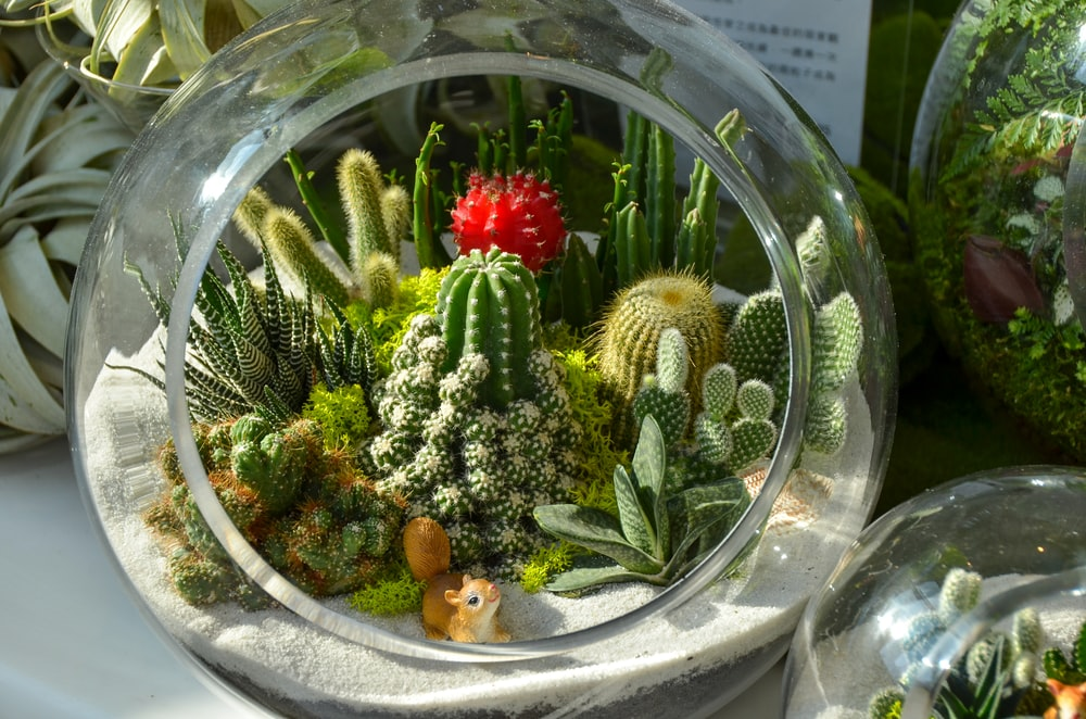 green cactus plant on clear glass bowl