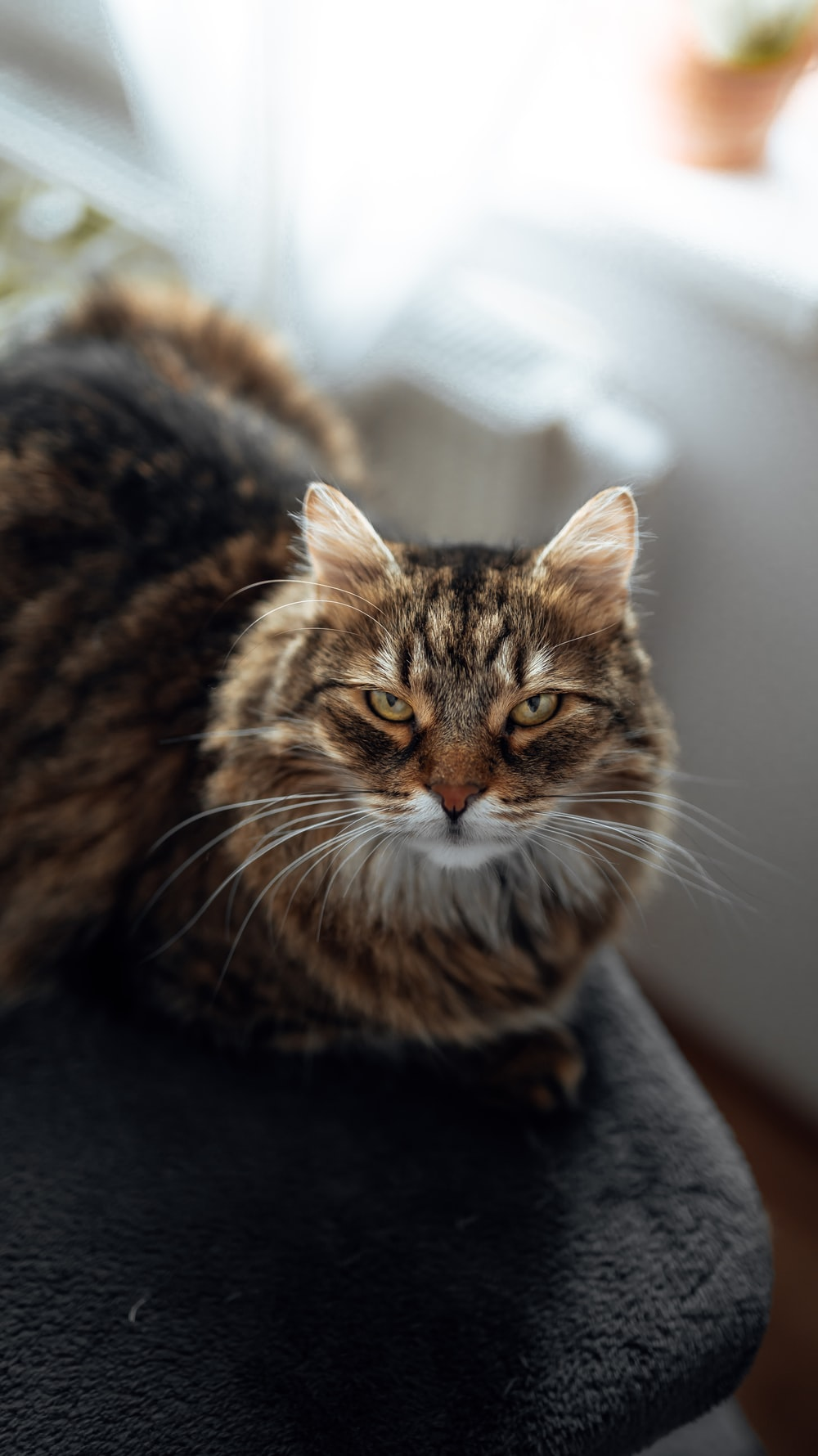brown tabby cat on black textile