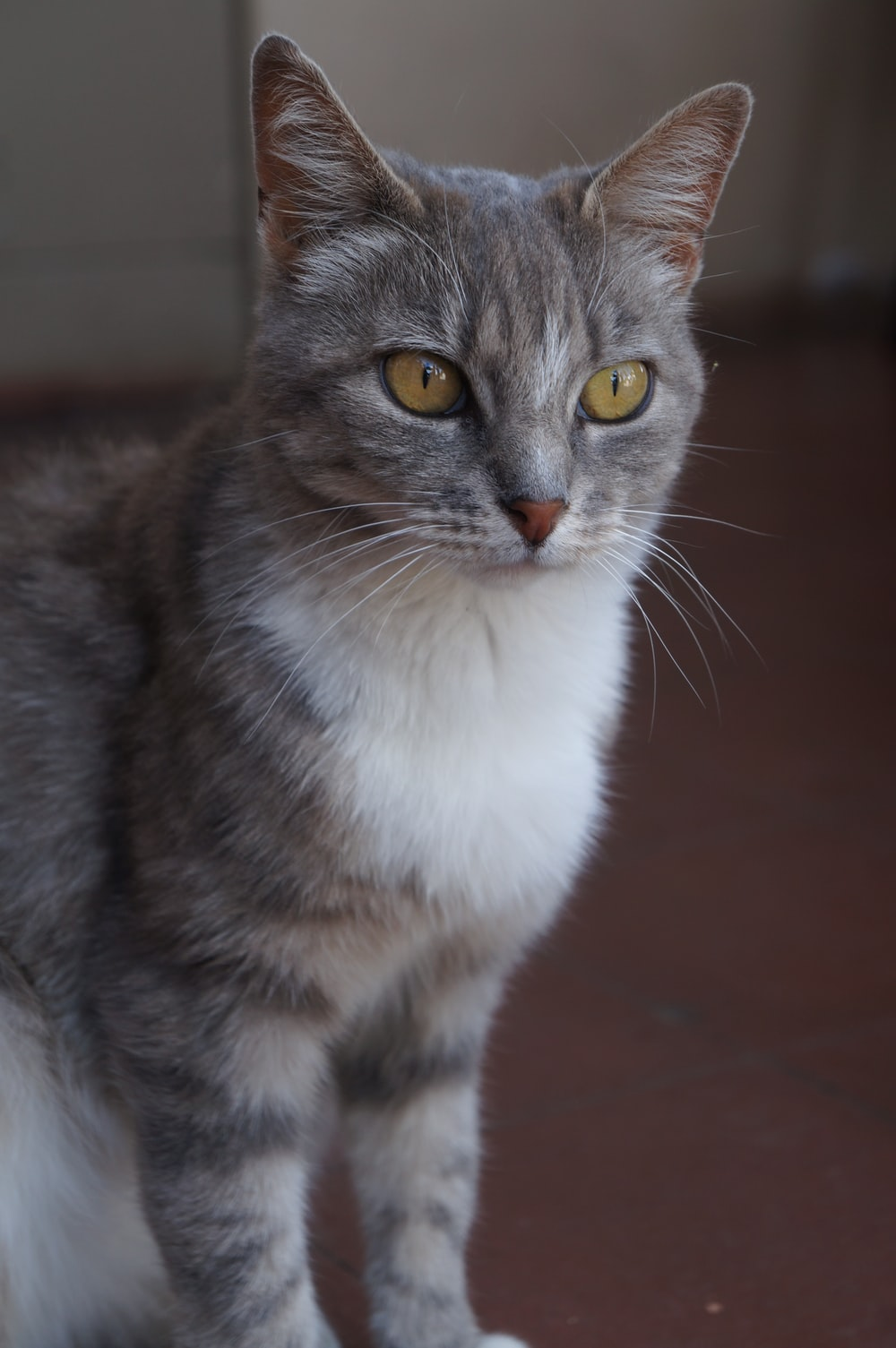 white and gray cat on brown floor
