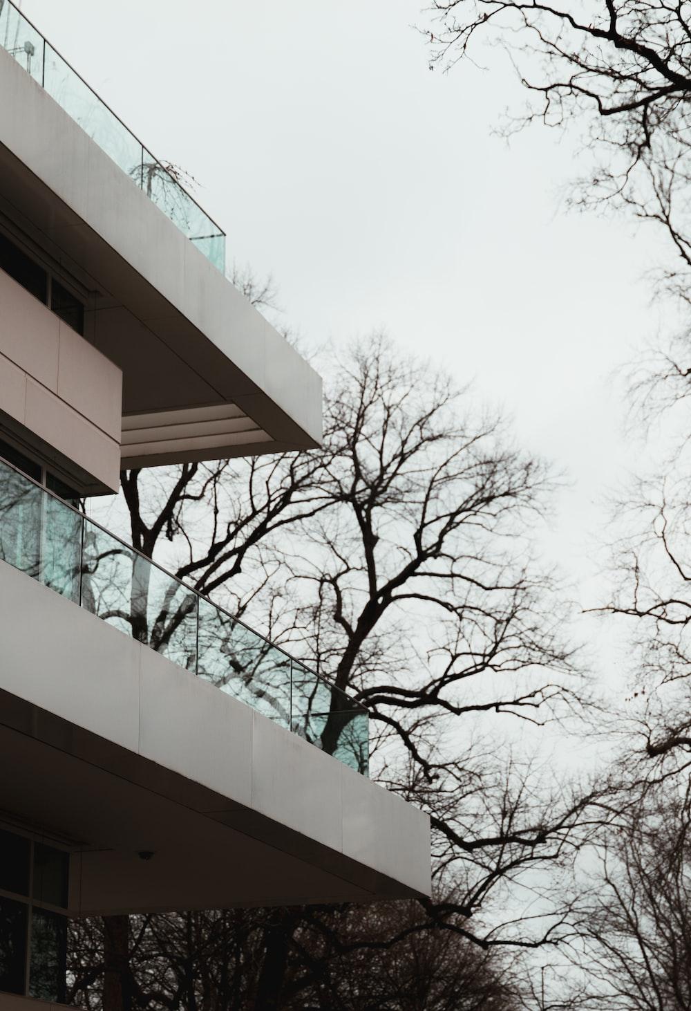 bare tree beside white concrete building