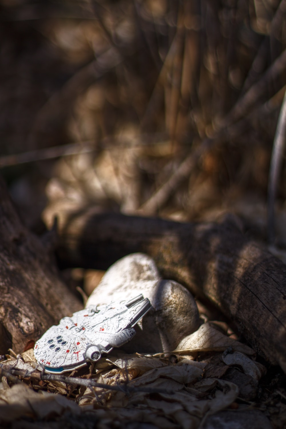 black and white reptile on brown tree trunk