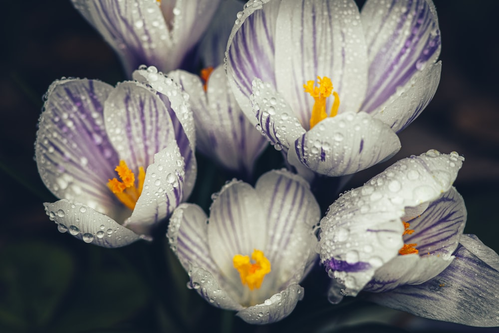 white and purple flower with water droplets