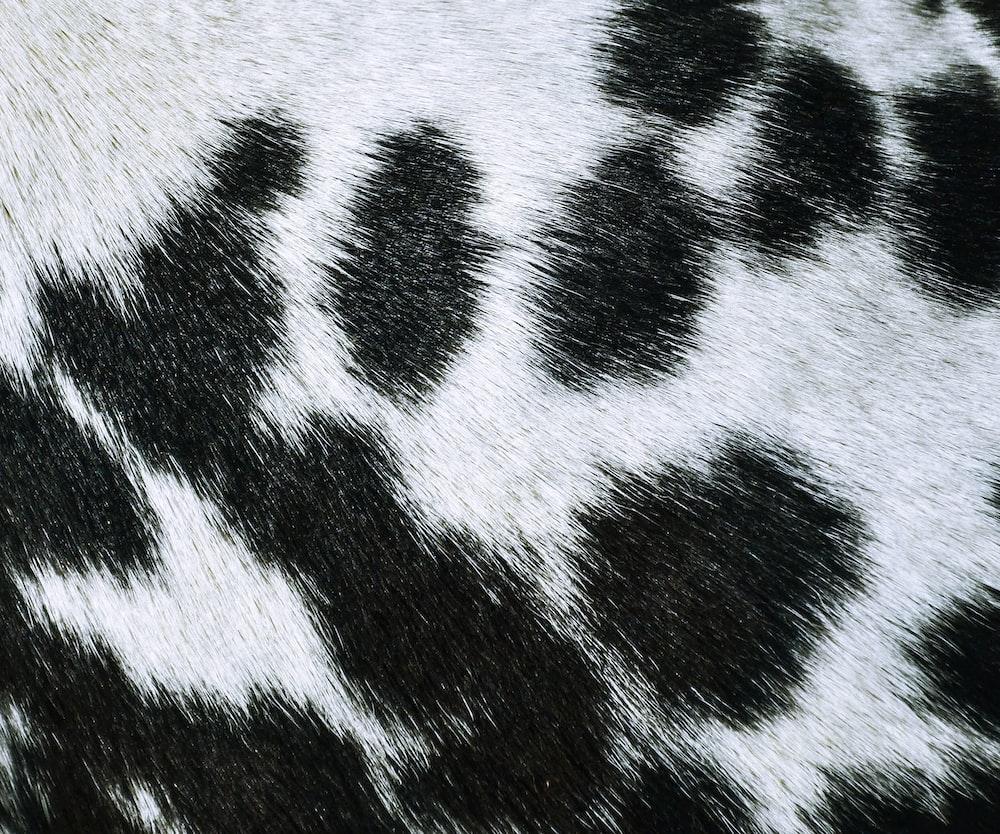 black and white zebra textile