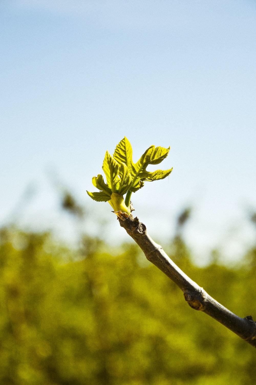 green leaf on brown stem