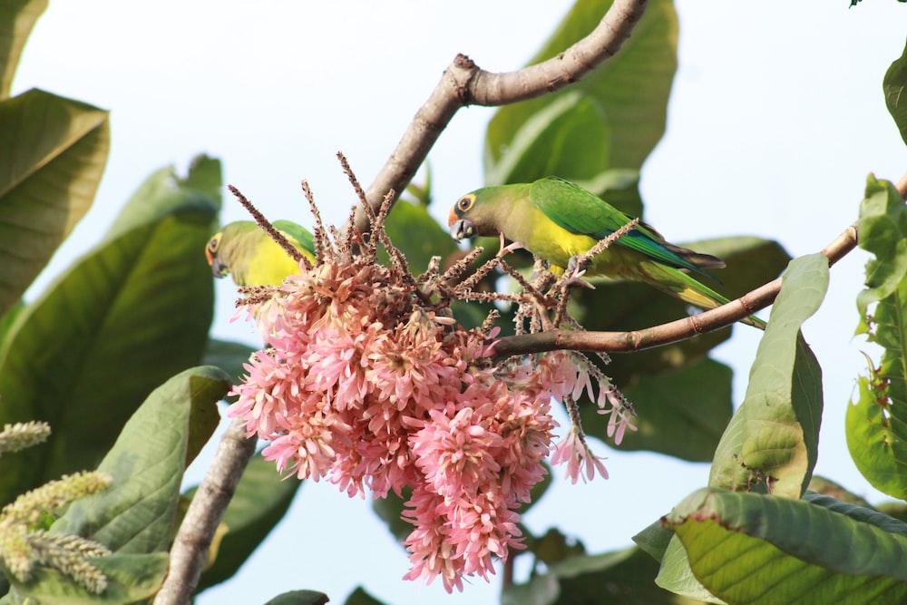 green bird on pink flower