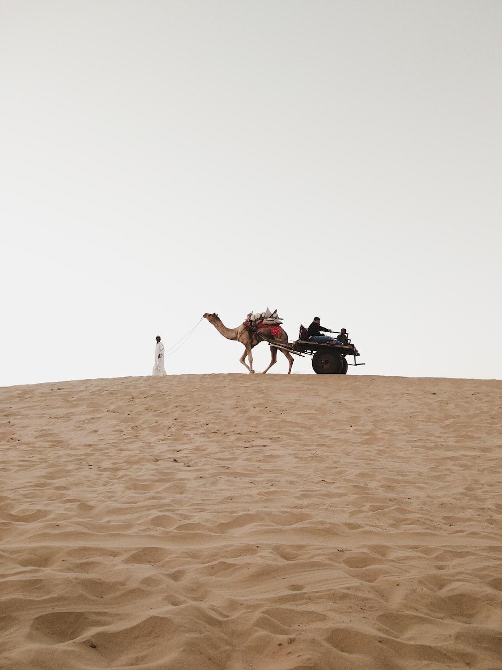 man riding camel on desert during daytime