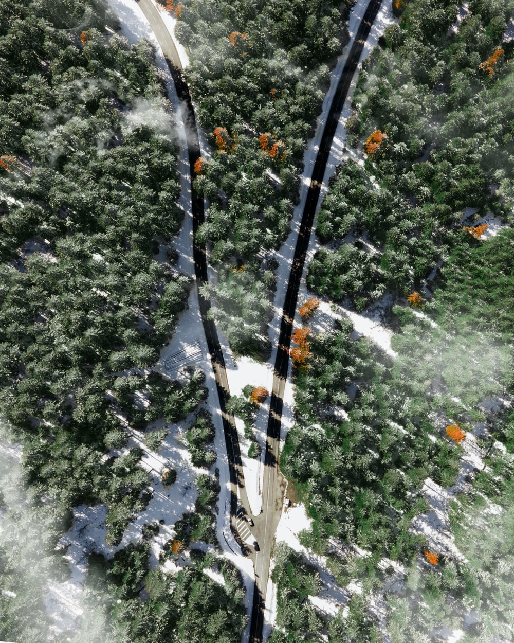 aerial view of green trees and white snow