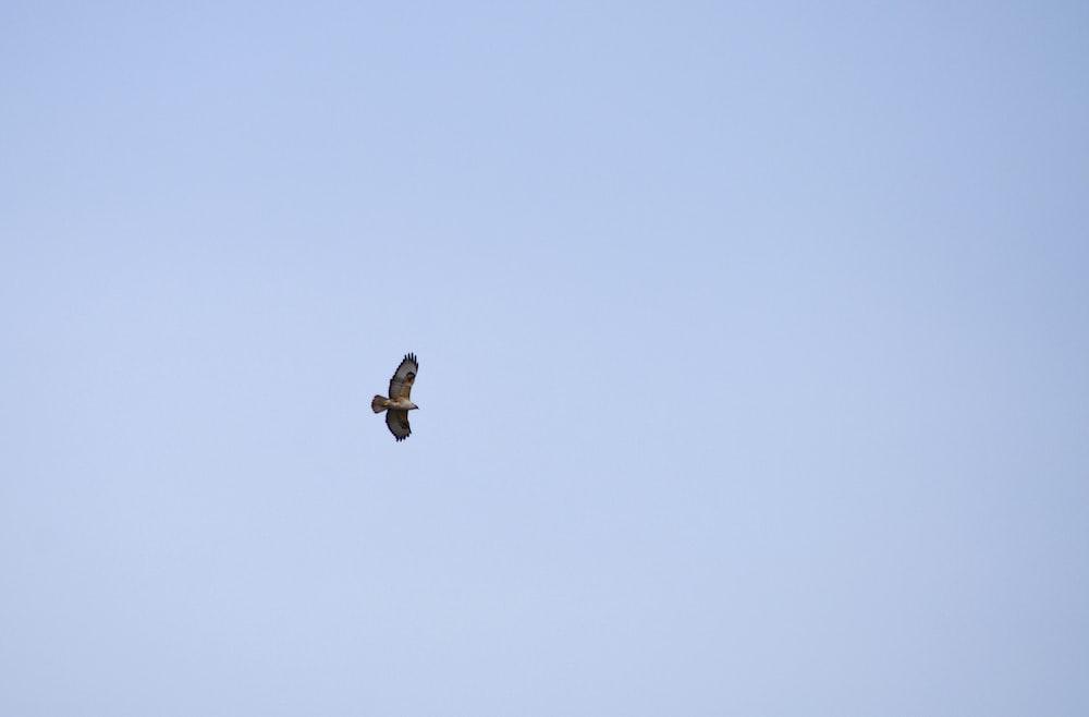black bird flying under blue sky during daytime