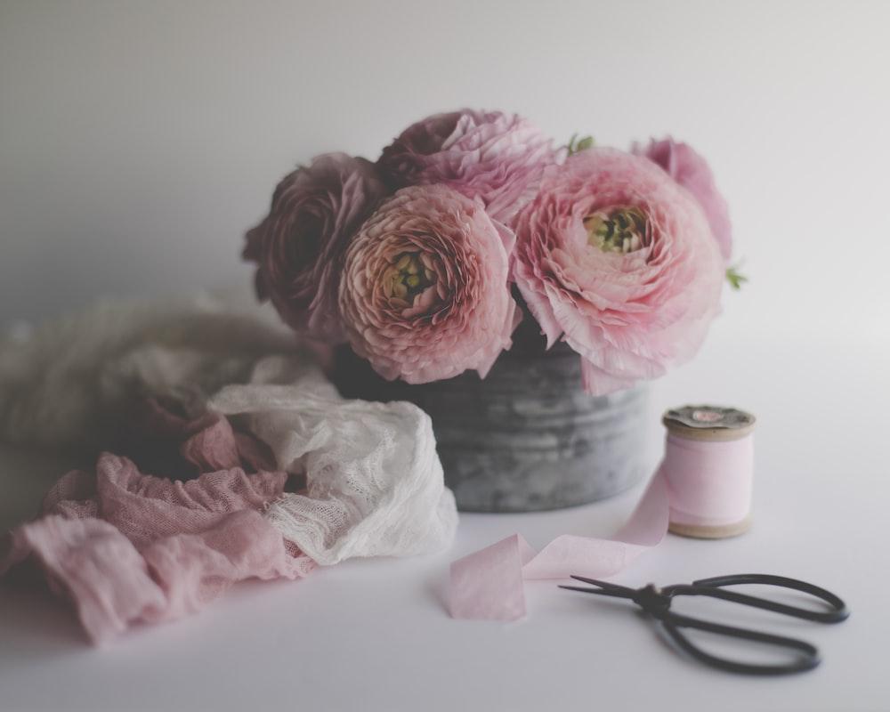 pink roses beside black scissors
