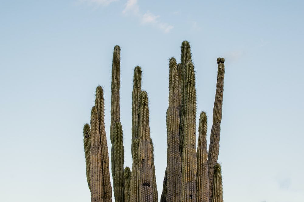 brown cactus under white sky during daytime