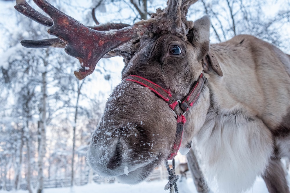 brown horse with white snow on head