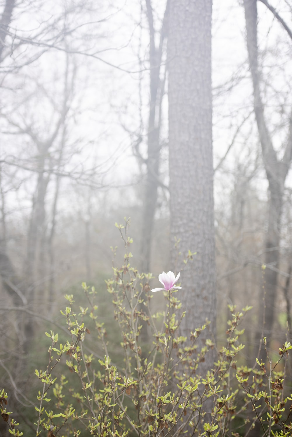 white flower in the forest during daytime
