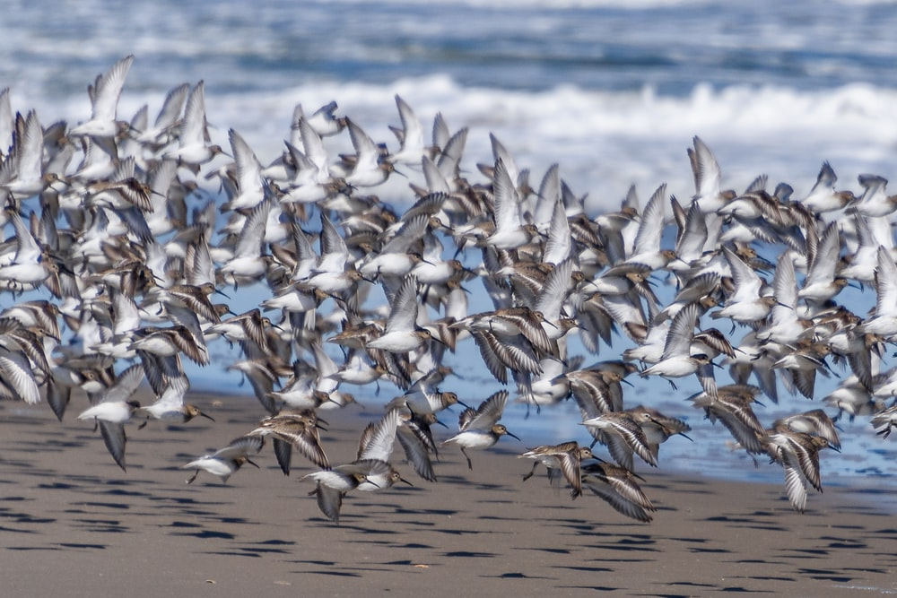 white and black birds on shore during daytime