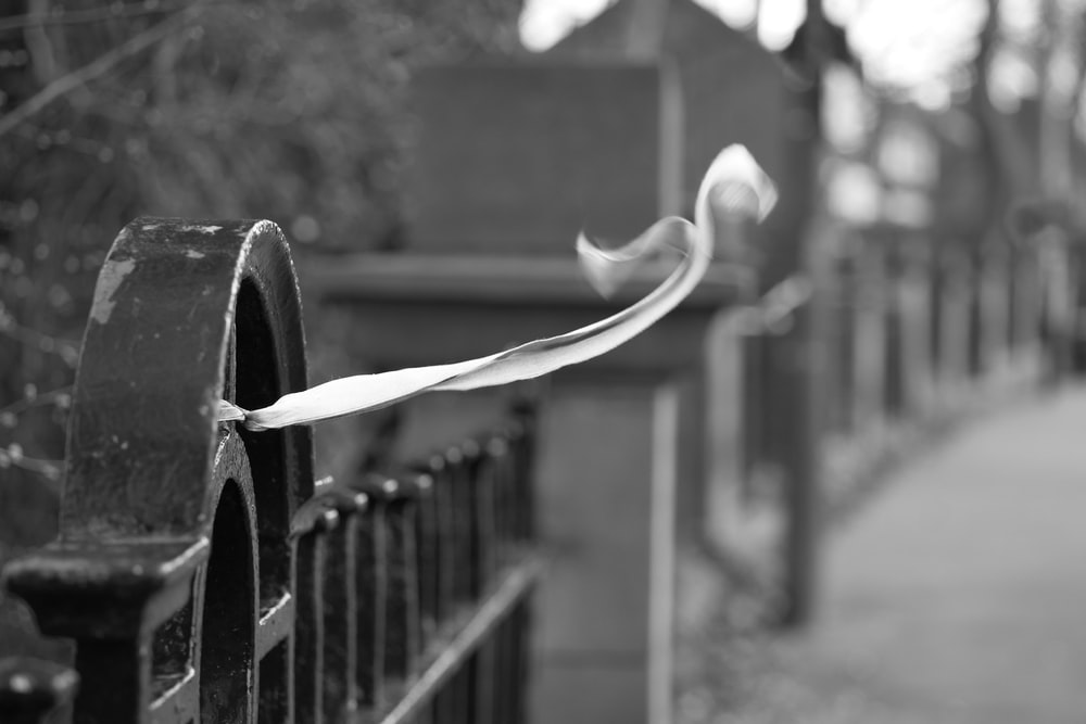 grayscale photo of water drop on metal fence